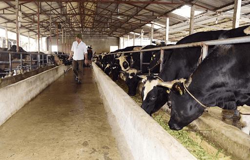 Giống vật nuôi có vai trò như thế nào trong chăn nuôi